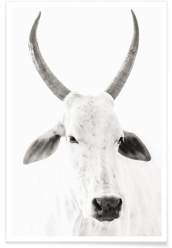 Kühe, Schwarz & Weiß, White Cow -Poster