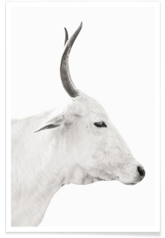 Vaches, Noir & blanc, White Cow 2 affiche