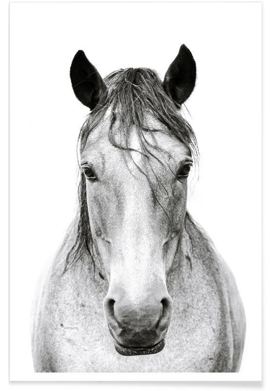 Chevaux, Noir & blanc, Horse 2 affiche