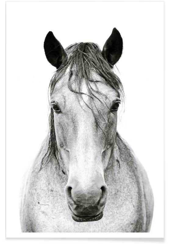 Paarden, Zwart en wit, Horse 2 poster