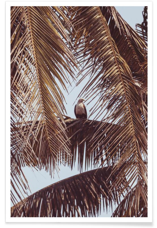 Palms, Eagle Poster