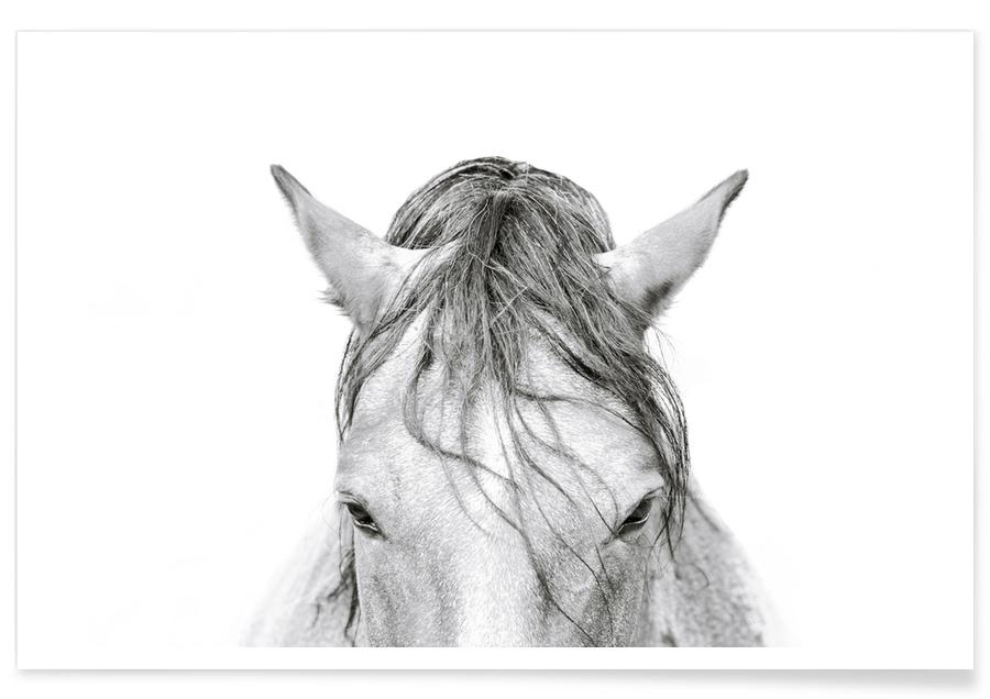 Chevaux, Horse 3 affiche