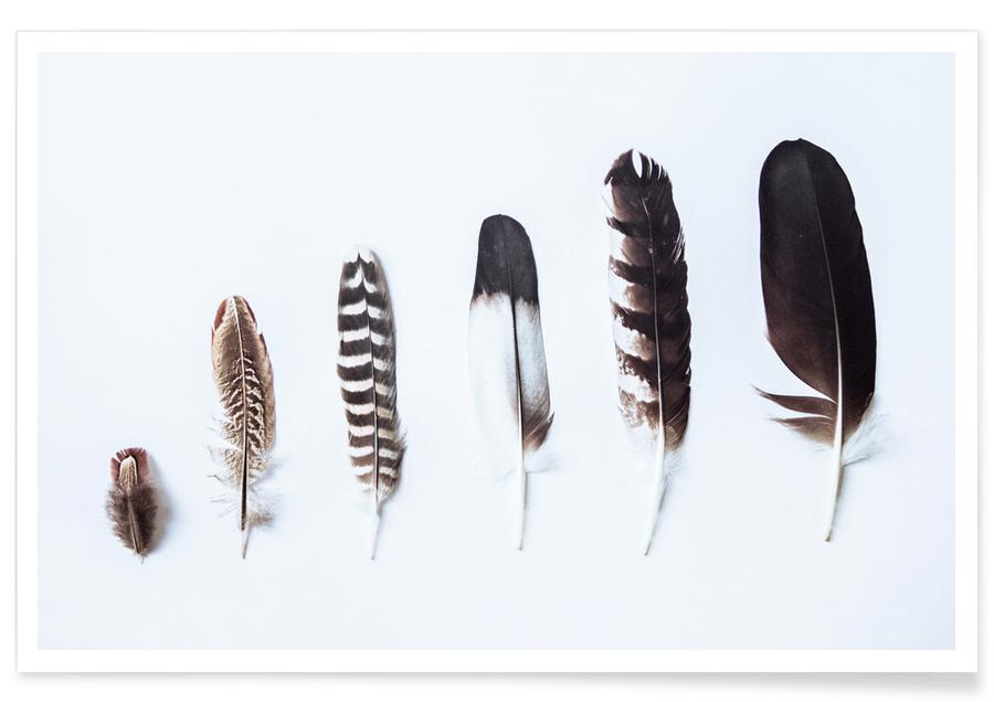 Plumes, Feathers affiche