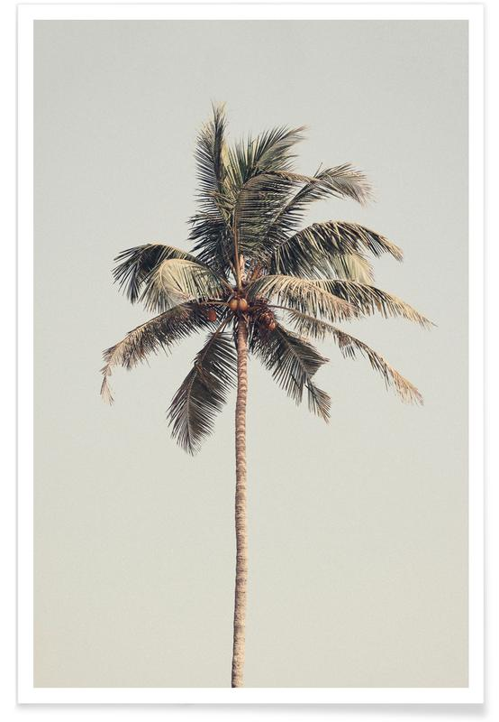 Palmiers, Palm Tree By The Beach affiche