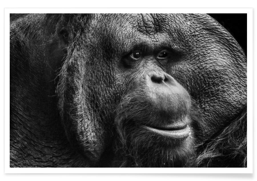 Sumatran Orangutan -Poster