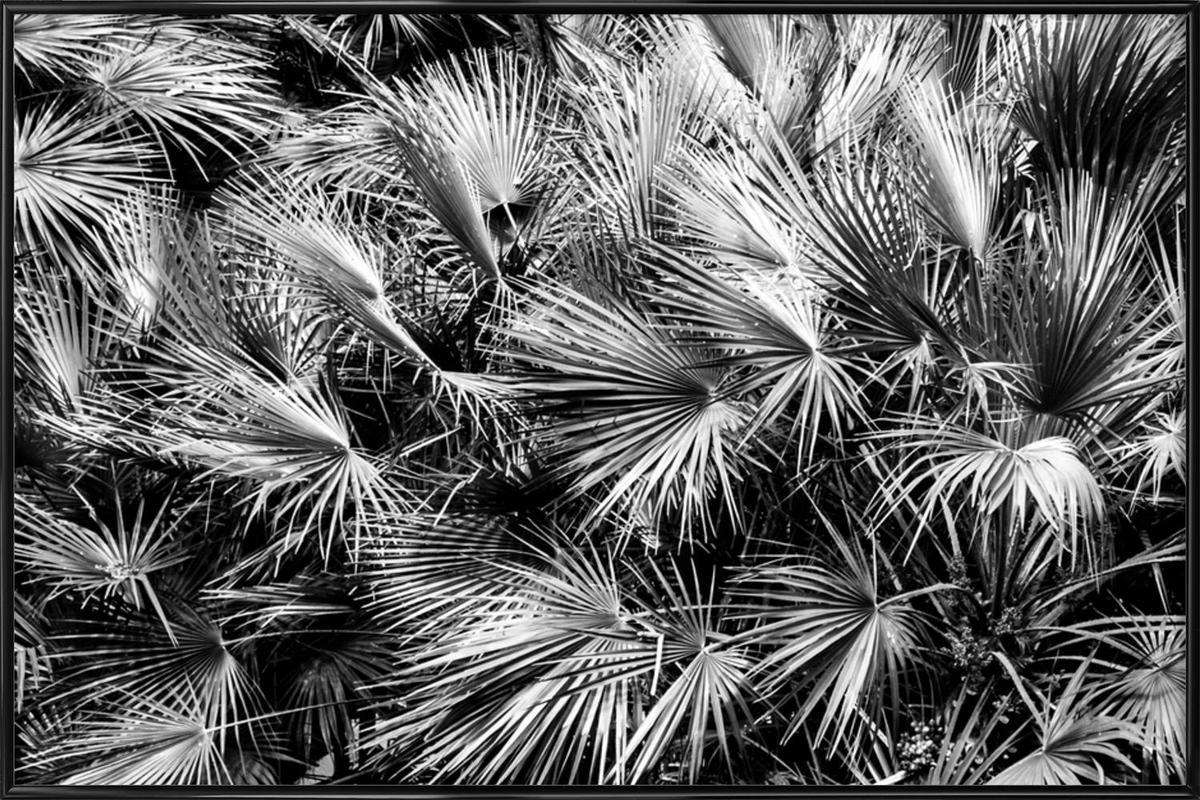 Palm Trees Framed Poster
