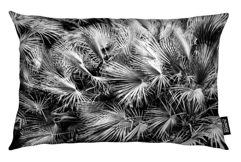 Black & White, Leaves & Plants, Palm Trees
