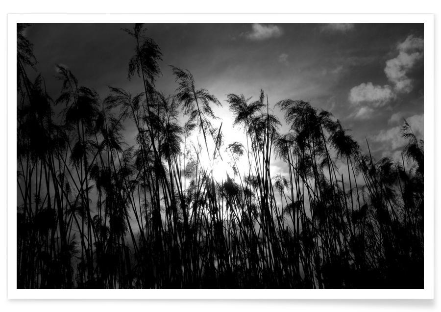 Blätter & Pflanzen, Through the Reeds -Poster