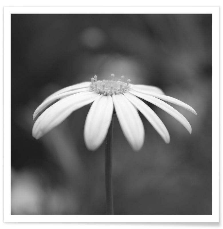 Zwart en wit, Madeliefjes, Daisy poster