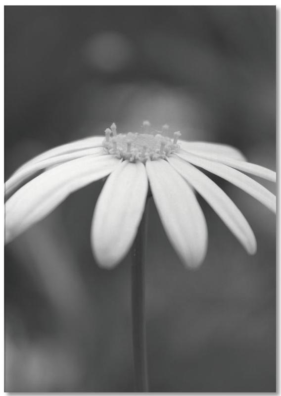 Daisy -Notizblock