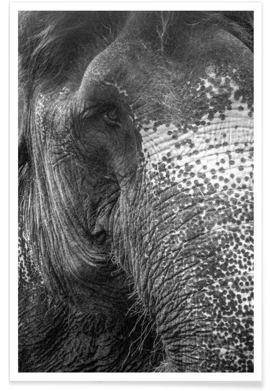 Noir & blanc, Éléphants, Elephant affiche