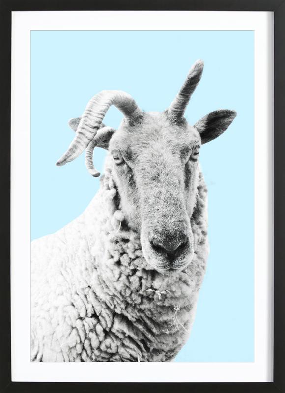Blue Sheep Framed Print