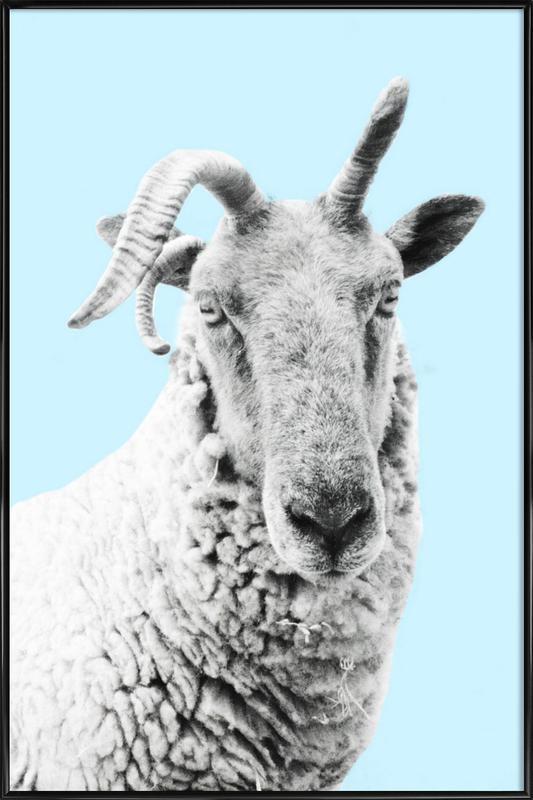Blue Sheep affiche encadrée