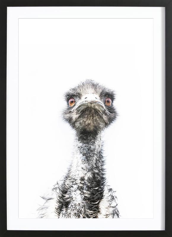 Emu affiche sous cadre en bois