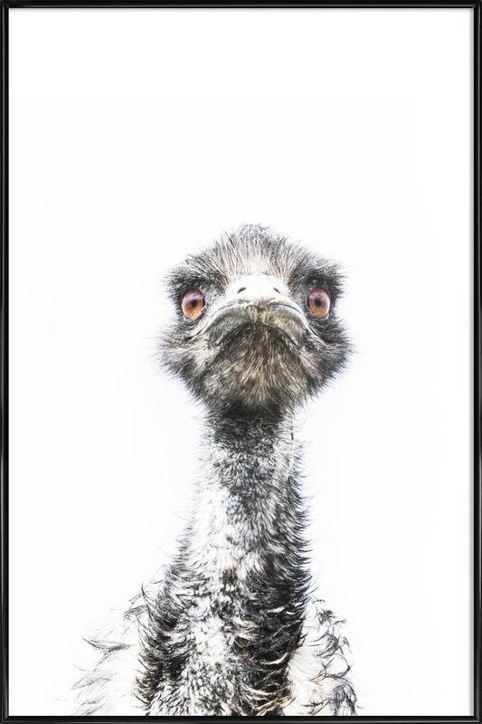 Emu affiche encadrée