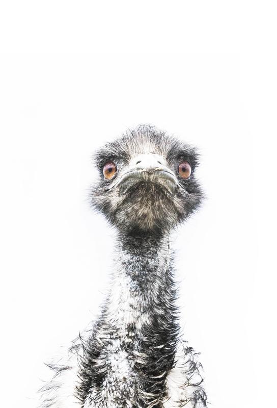 Emu tableau en verre