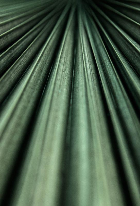 Green Palm Aluminium Print