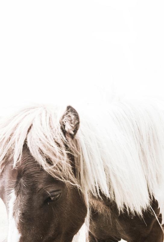 Horse II Impression sur alu-Dibond