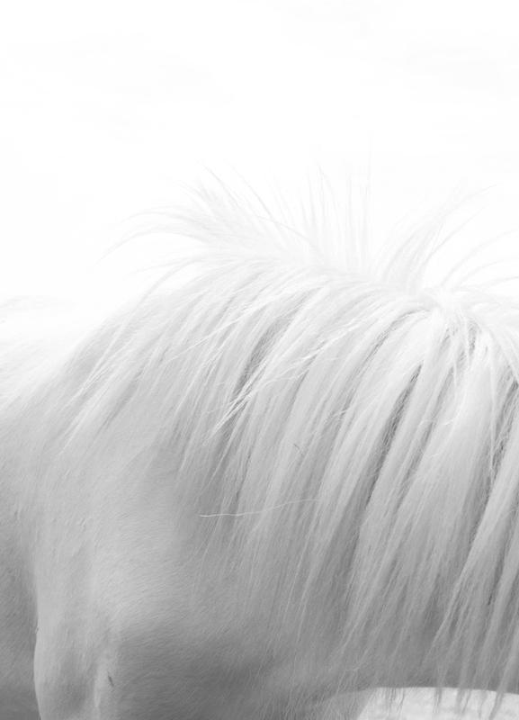 Horse Mane III toile