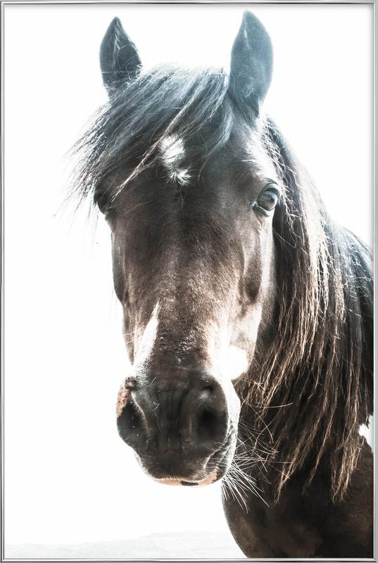 Horse affiche sous cadre en aluminium