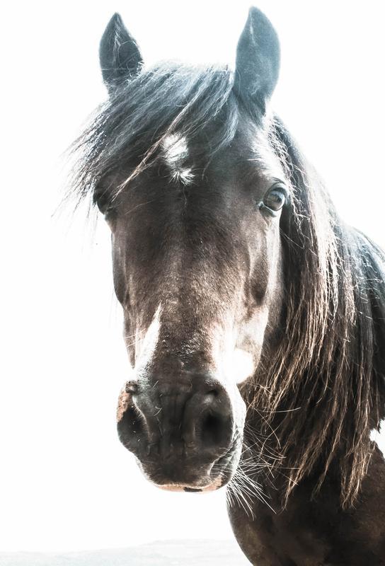 Horse tableau en verre