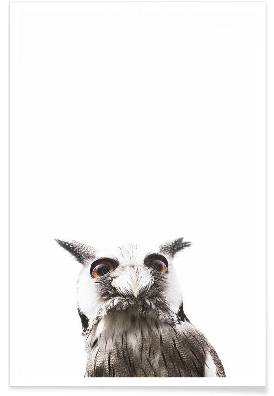 Lil Owl affiche