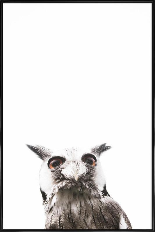 Lil Owl affiche encadrée