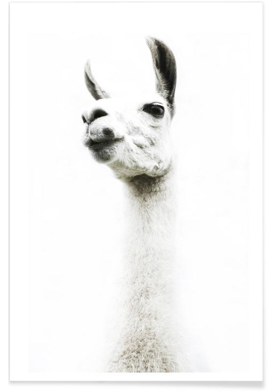 Llamas, Llama I Poster