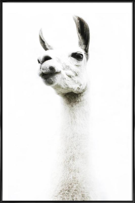 Llama I affiche encadrée