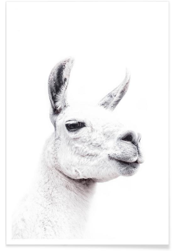 Lama, Llama II -Poster