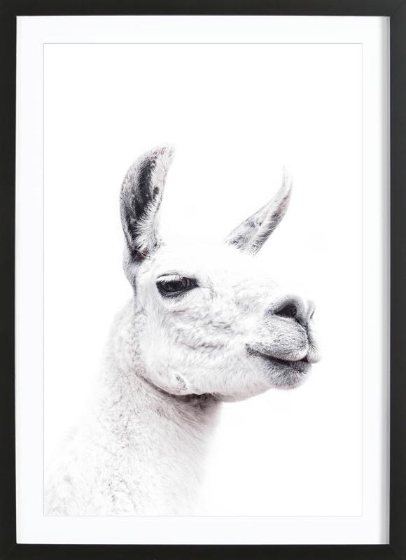 Llama II affiche sous cadre en bois
