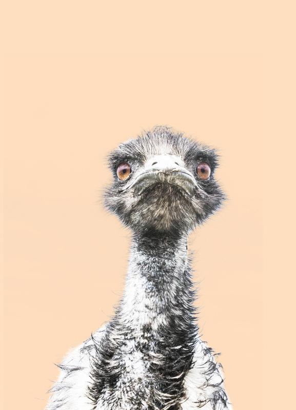 Orange Emu toile