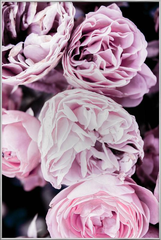 Pink flowers II affiche sous cadre en aluminium