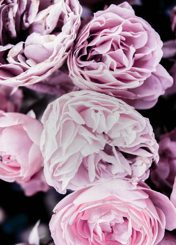 Pink flowers II toile