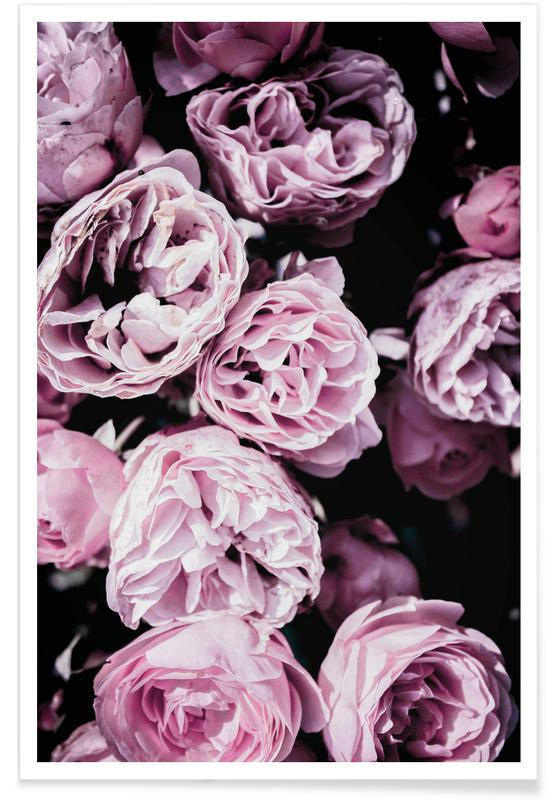 Roses, Pink Flowers III Poster