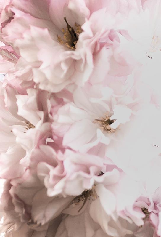 Pink Flowers Impression sur alu-Dibond