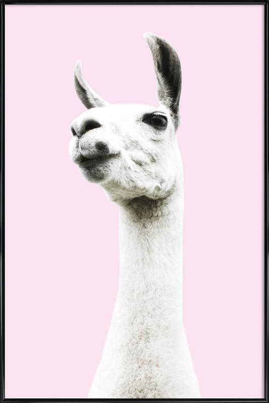 Pink Llama affiche encadrée