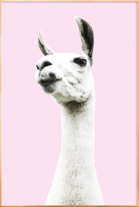 Pink Llama affiche sous cadre en aluminium