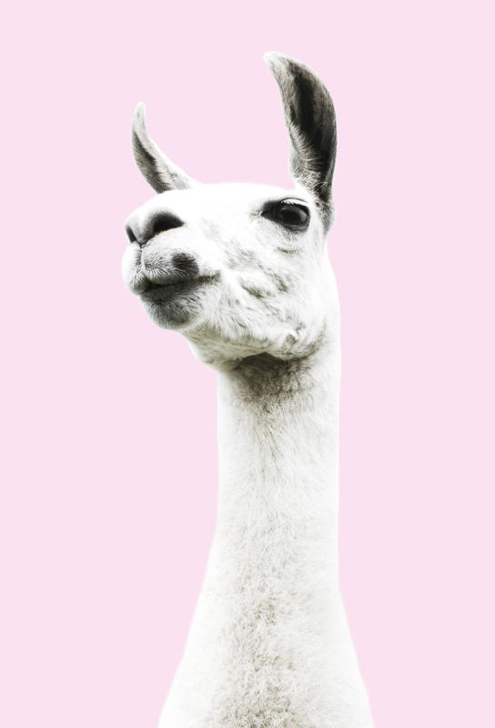 Pink Llama Impression sur alu-Dibond