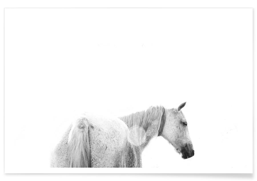 Horses Back Poster