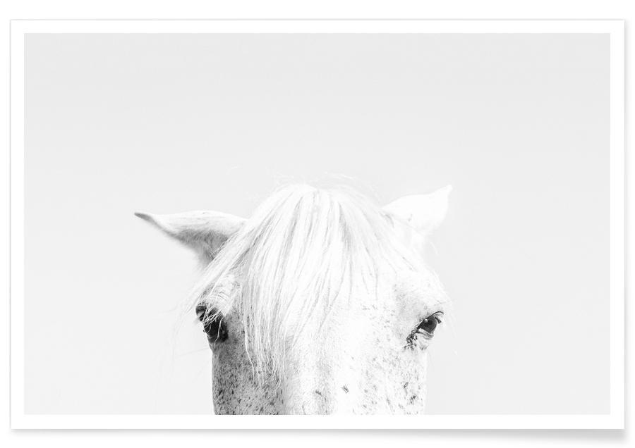 Schwarz & Weiß, Pferde, White Horse -Poster