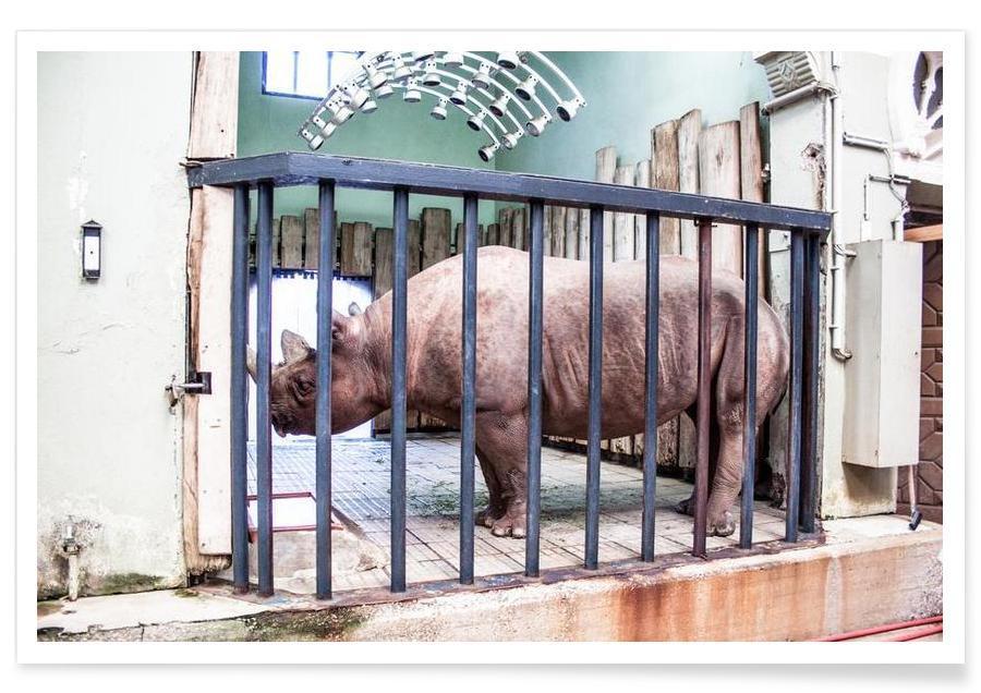 Nashörner, Disuse -Poster