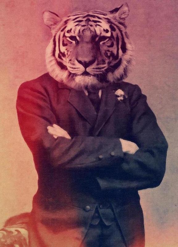 Old Timey Tiger canvas doek