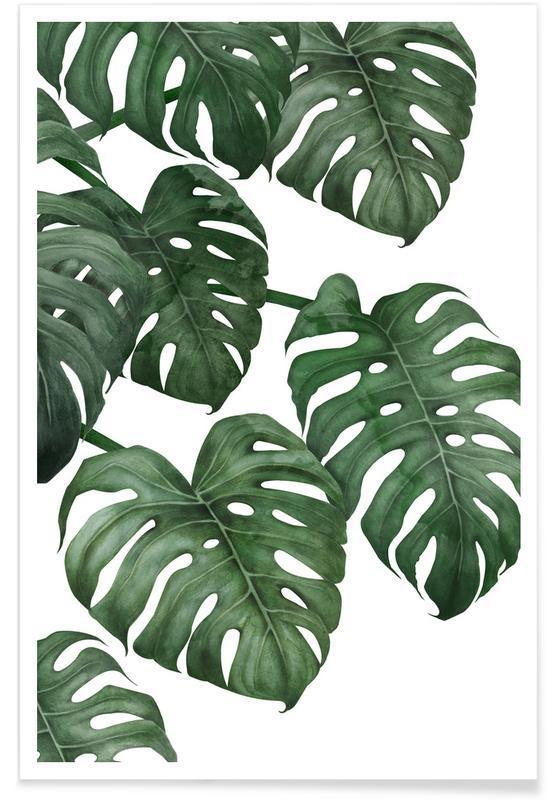 Feuilles & Plantes, Plante monstera affiche