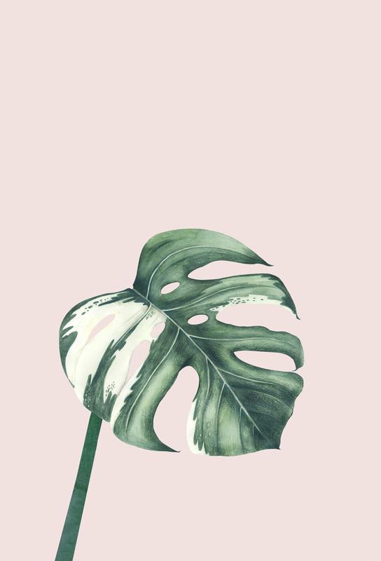 Tropical No. 11 -Alubild