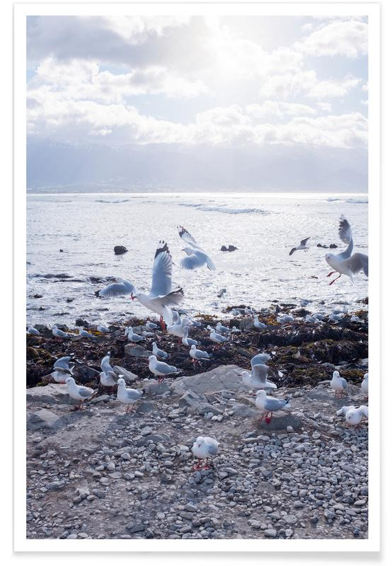 Oceanen, zeeën en meren, Meeuwen, Coast poster