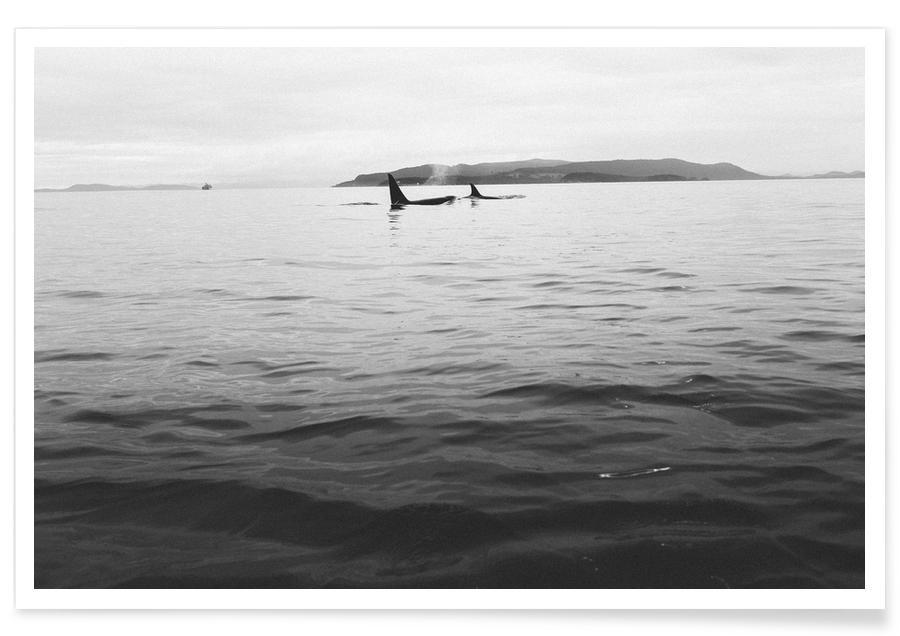 Oceanen, zeeën en meren, Walvissen, Zwart en wit, Canada 7 poster