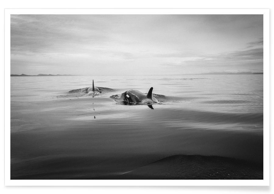 Océans, mers & lacs, Noir & blanc, Baleines, Canada 8 affiche