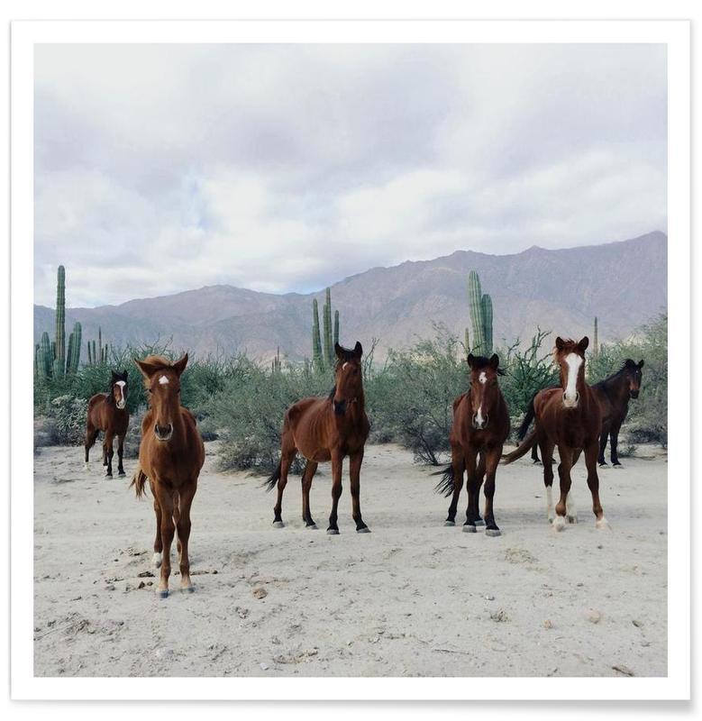 Déserts, Chevaux, Bahía de los Ángeles Wild Horses affiche