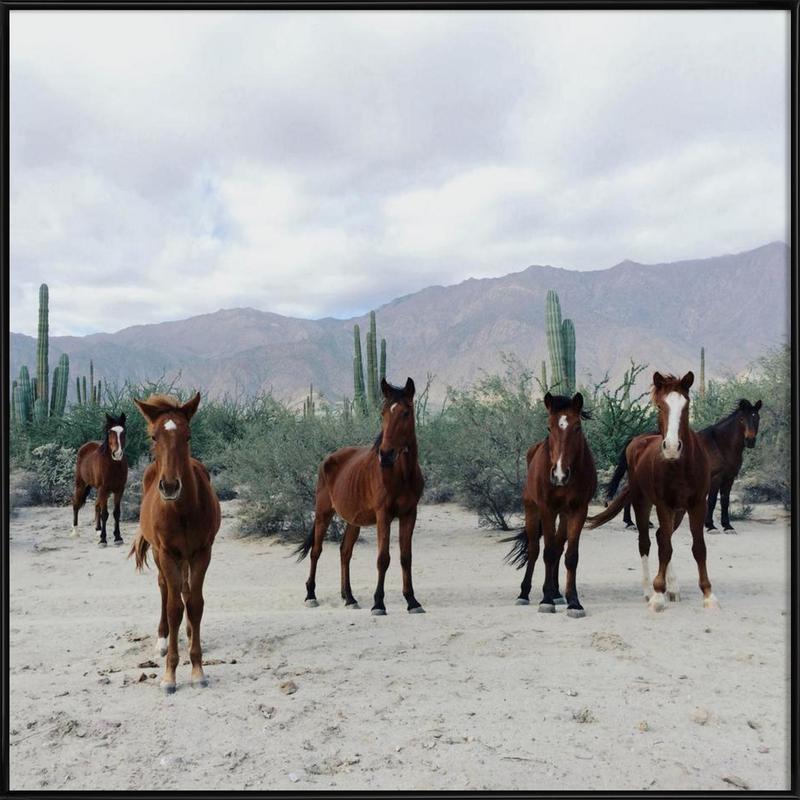 Bahía de los Ángeles Wild Horses Framed Poster